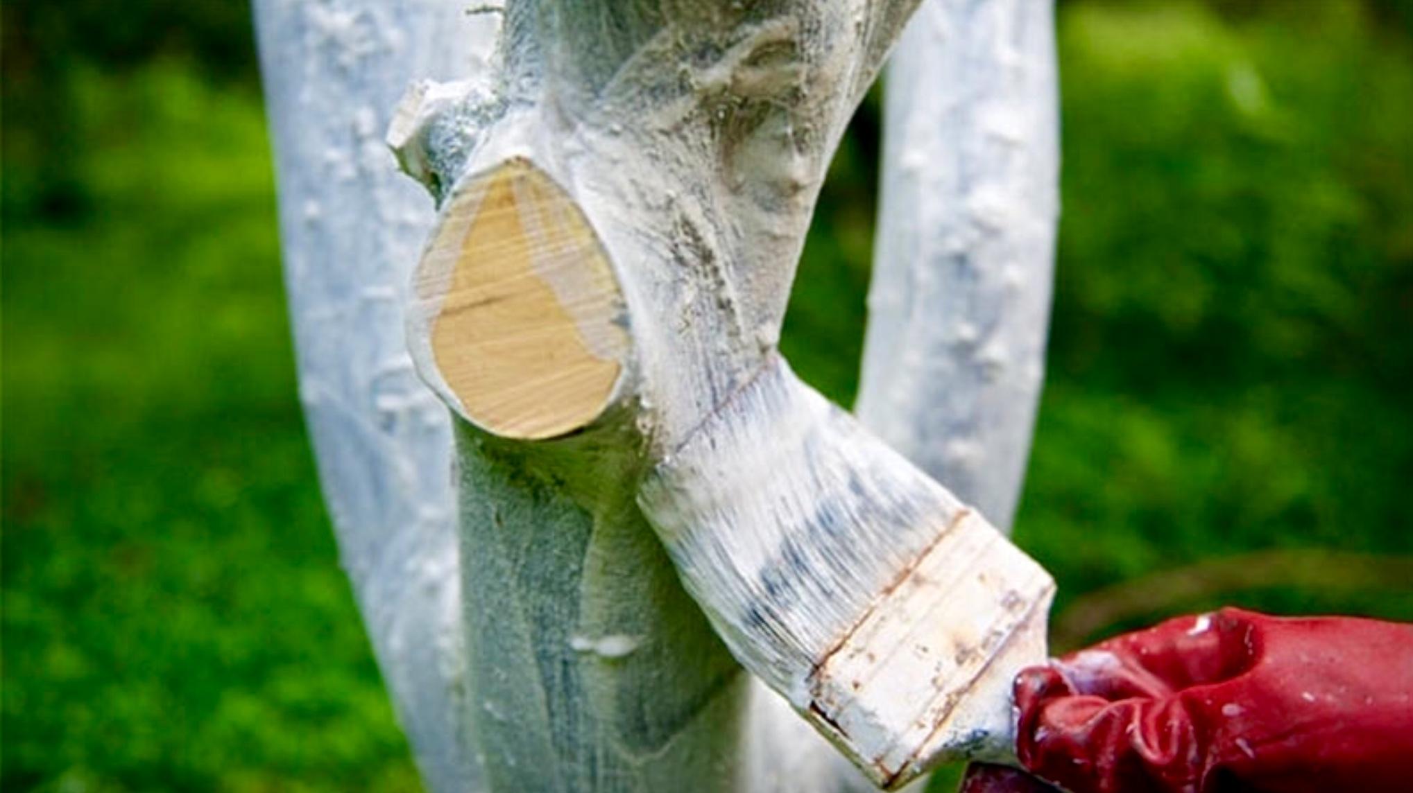 Состав для побелки деревьев своими руками